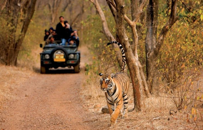 ranthambhore-tiger-safari